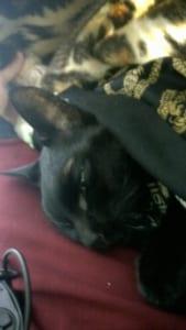 生前最後の写真。 一緒に寝ようと布団で撮った写真。亡くなる2時間前ぐらいかな?