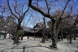 2015 靖国神社 桜